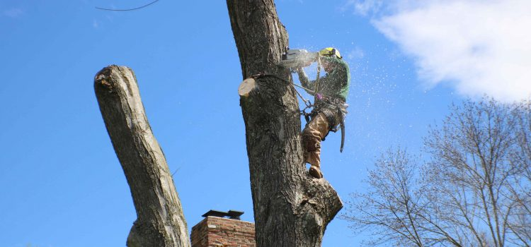 Joe Connell, Manor Tree Service, climbing and cutting tree