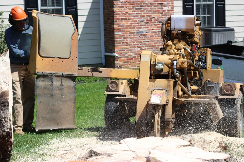 Stump Grinding following tree removal