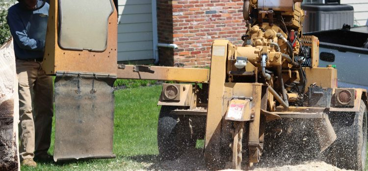 Best Stump Grinding Questions Answered