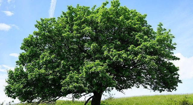 Does This Giant Tree in My Yard Really Add Value to My Property?