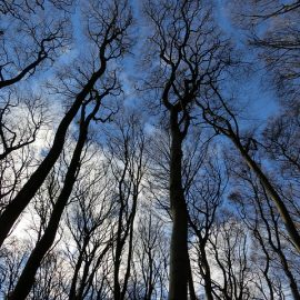 Winter Tree Inspection & Assessment   Manor Tree Service   Glen Arm, MD   Baltimore & Harford County