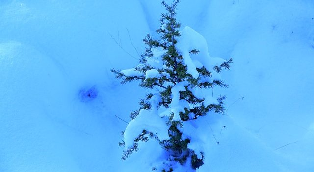 How to Take Care of Your Young Trees in Winter