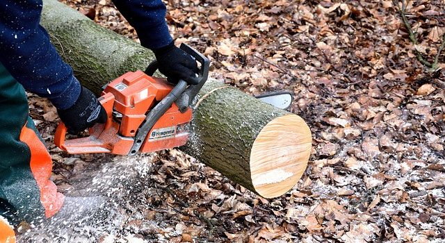 Tree Maintenance: When to DIY, When to Call a Pro