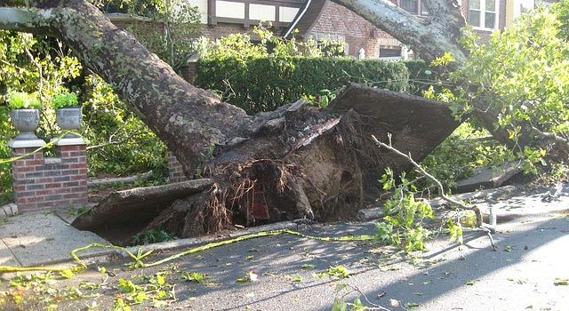 emergency tree service for tree fallen on home