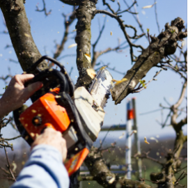 tree service in jacksonville md