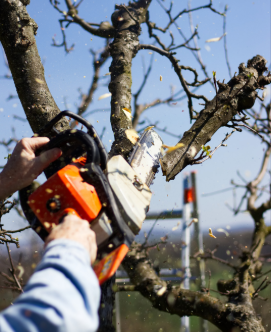 We Offer Complete Tree Service in Jacksonville, MD