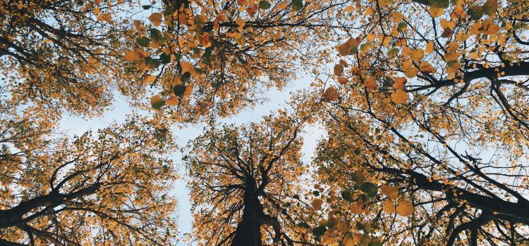 Why Tree Leaves Change Color