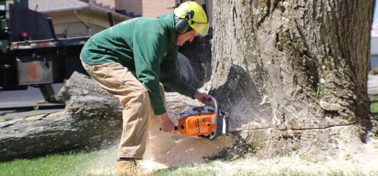 What Goes into Tree Cutting?
